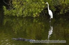 Everglades 01©