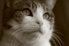 Cat 3 (Evelyn Arthur Richman) Tags: bestofcats boc0807