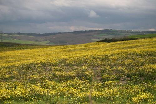 Spring Flowers in the Crete Senese