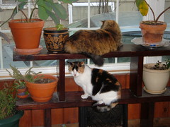 every blog needs a cat photo zoe and clara