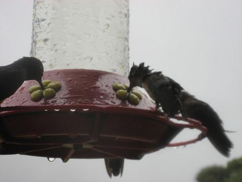 wet birds