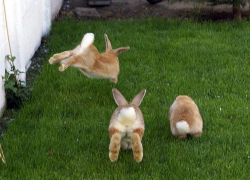 rabbits running away carrots