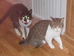 Jinx & Fiona (jwmcphee) Tags: fiona jinx