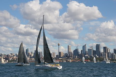 Yacht Race in Sydney Harbour