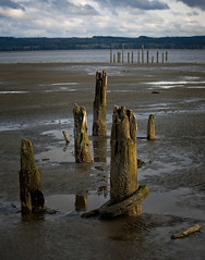 Grays Harbor Low Tide . 7 (Steven Schnoor) Tags: wood travel usa color colour reflection art tourism nature wet water colors vertical clouds river landscape outdoors bay daylight photo washington colours photographer unitedstates image outdoor decay scenic picture environmental nopeople location tires photograph shore pacificnorthwest northamerica environment pilings lowtide washingtonstate piling dramaticsky pnw lightroom graysharbor beautifuldecay westernwashington schnoor hoquiam simplelogic saywa experiencewa chehalisriver experiencewashington