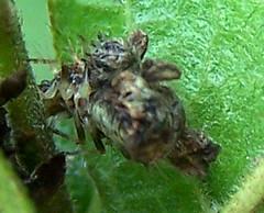 strange bug near babies