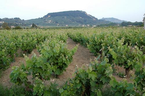 May Vineyards