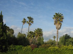 "palms • <a style=""font-size:0.8em;"" href=""http://www.flickr.com/photos/70272381@N00/485647080/"" target=""_blank"">View on Flickr</a>"