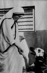 foto di una foto (Monia Sbreni) Tags: dog india cane indian indie kolkata bengal calcutta motherteresa madreteresa sfidephotoamatori moniasbreni reportase