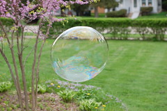 Big bubble, Small world (John Rav) Tags: yard d50 50mm prime interestingness nikon all bokeh thing saturday explore rights bubble oily nikkor mayday reserved soapy redbud may5th interestingness368 i500 24hoursofflickr interestingnessftw arrallrightsreservedjohnrav