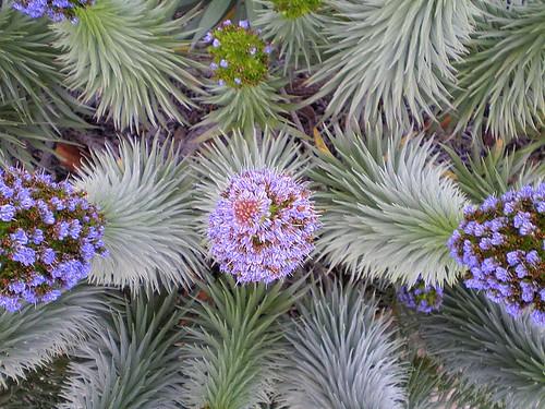 Flowering Plant in Balboa Park