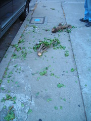 Jade plant murder!