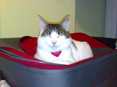 11042007023.jpg (judey) Tags: cat twinkle