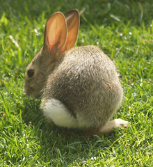 baby bunny. (Eleventh Earl of Mar) Tags: california friends party music baby cute bunnies garden fun furry squirrel squirrels funny babies eating weekend may olympus bbq booze laughter 12th 2007 evolt wii e500