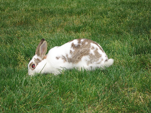 terminator bunny