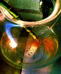 bamboo in the glass (Giusy Iescone (cantoliberox)) Tags: glass drops bamboo relection riflessi hdr radici vaso vetro gocce kodakz650
