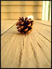 .Single. (.krish.Tipirneni.) Tags: wood shadow brown flower lines pine wooden buddha balcony crack single cracks pinecone cones pinecones naturesfinest abigfave rktobjects diamondclassphotographer flickrdiamond bdppow