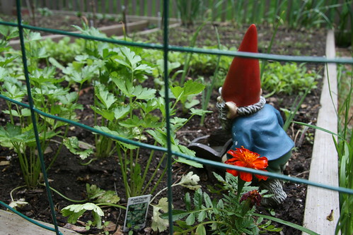 gnome at work