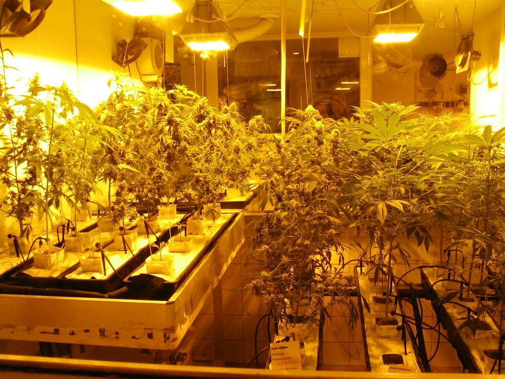Netherlands: Amsterdam: Hemp & Marijuana Museum