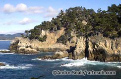 ©Point Lobos 3