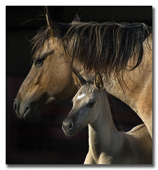 Circle Of Life (nailbender) Tags: ranch horse bravo mare quality birth foal naturesfinest nailbender supershot magicdonkey specanimal abigfave aplusphoto bestofbestnature tcb3 qemdfinchadminfavformay jdmckinnon justhitmewithyourbestshot3rdplaceseptember2008photocontest