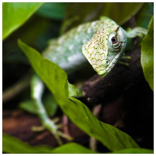 green digital lizard scales oslointhesummertime