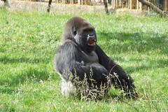 London Zoo #46