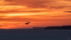 Rise (Anthony Goodall) Tags: sunrise sun light sea coast nature clouds weather red landscape seaside seascape seagull beautiful