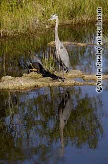 Everglades 04©