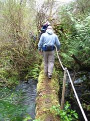 Log bridge over 10 Creek