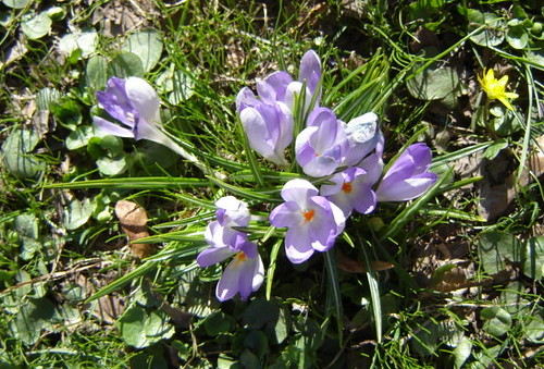 Kevätkukkia Kaivopuistossa by Anna Amnell