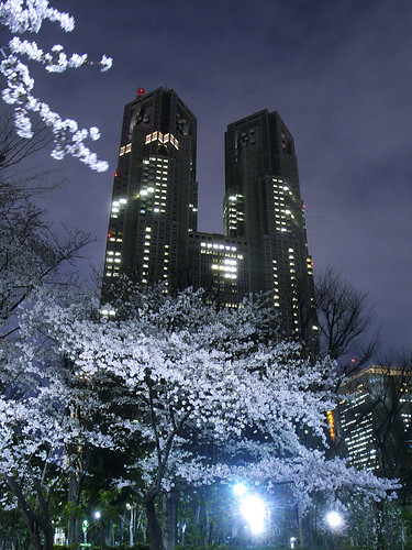 cherry tree in front of the Metropolitan Government Office