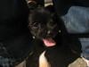 Nero (Stranju) Tags: dog black macro cute dogs cane italia dia cutie lingua doggy closer cucciolo socute richiesta canonpowershots3 stranju withcanonican cuccili ravviciato nonvienimaiinvisitaaa