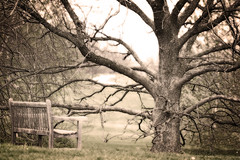 Remember how the course of Time will swerve (code poet) Tags: tree bench landscape lexington kentucky arboretum 100mm