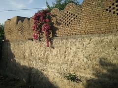 Flowerfalls... (iamkhayyam) Tags: pakistan punjab wah taxila cantt