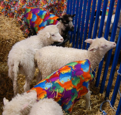 Sheep in Coats
