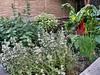 20070508 Herb Garden