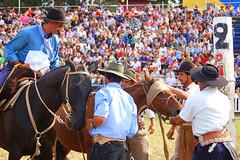 Danton Delgado, el capataz (Eduardo Amorim) Tags: horses horse southamerica caballo uruguay cheval caballos cavalos prado montevideo pferde cavalli cavallo cavalo gauchos pferd hest hevonen chevaux gaucho  amricadosul montevidu hst uruguai gacho  amriquedusud  gachos  sudamrica suramrica amricadelsur  sdamerika   americadelsud  americameridionale semanacriolla semanacriolladelprado eduardoamorim