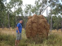 Termite mound3