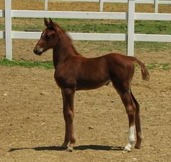 Statue (Trish Overton) Tags: horse explore filly foal naturesfinest abigfave