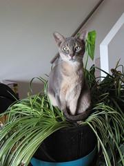 Maneki in the plant.