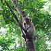 Sacred Monkey Forest Sanctuary @ Ubud, Bali