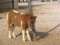 pony (StellaGr) Tags: horse brown white animal zoo sad shy pony lonely spata