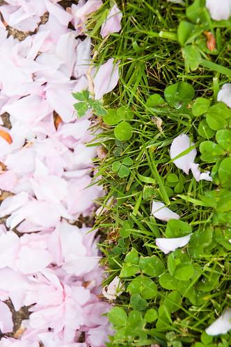 clover contrast