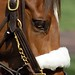 Lexington Kentucky - Keeneland Race Track Hard & Soft
