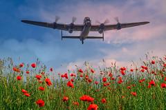 POP0005 (Smart Aviation Art) Tags: poppy poppies poppyfield poppyfields lancaster vulcan avro spitfire hurricane aircraft military bbmf