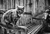 FELINI (Masssimiliano Maggi) Tags: cat felini animali panchina maxmaggi