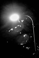 20161102-005 (sulamith.sallmann) Tags: berlin blur deutschland effect effekt filter folientechnik germany grüntalerstrase lamp lampe mitte nacht nachtaufnahme nachts night nightshot strasenlampe strasenlaterne unscharf wedding sulamithsallmann