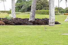 Little bird (denschub) Tags: mozaloha waikoloavillage hawaii unitedstates us
