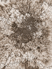 Red-straws-or-axon-bundles--sepia-copy (mbgmbg) Tags: boost copy desaturate fpasquali francescapasqualiredstraws kw2flickr kwgooglewebalbum kwphotostream5 kwpotppt london lumoish masterpiece masterpiece2016 masterpiecelondon2016 pasquali pencilsketch redstrawsoraxonbundles redstraws sepia series seriesredstraw takenbymarkgerstein